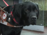 Formation de chiens guides d'aveugles, une expérience à part