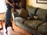 Un Rottweiler empêche un père de frapper son fils