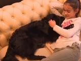 Le Waf, le premier café-chiens d'Europe ouvre ses portes à Lille