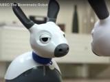 Miro, les premiers pas d'un chien-robot de compagnie
