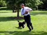 Y aura-t-il un chien à la Maison Blanche? Donald Trump hésite...