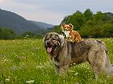 Y a-t-il réellement des races de chiens plus agressives que d'autres ?