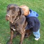 Le chien, gardien des infections du bébé