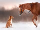 La cohabitation du chien avec les autres espèces