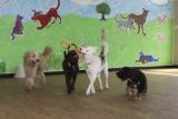 Montréal :  garderies éducatives pour les chiens!