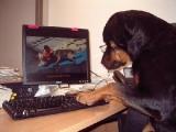 des dizaines de vidéos pour mieux éduquer son chien
