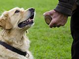 Comment enseigner l'obéissance à son chien ?