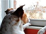 Comment habituer son chien à rester seul ?