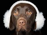 Comment éduquer un chien sourd ?