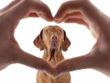 Comment montrer à mon chien que je l'aime ?