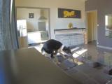 Que fait mon chien pendant mon absence ?