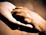 La cohabitation entre chiens et humains, cela s'apprend