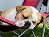 Du reggae et du soft rock pour adoucir les mœurs de votre chien