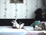 Que font votre chien et votre chat en votre absence?