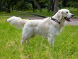 Reconnaître un chien sans problème