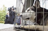 canada - Bien des morsures de chiens pourraient être évitées