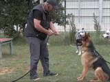 Comment gérer l'agressivité de son chien ?