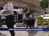Fait divers à Marseille - Pourquoi un chien a attaqué un enfant