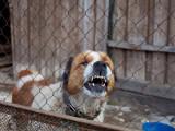 Les chiens agressifs sont-il des chiens dominants ?