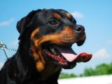Mon chien est-il dangereux ?