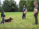 Un berger allemand protège sa jeune maîtresse