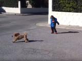 Un garçon et un Caniche nain jouent ensemble
