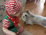 Un bébé déguisé en elfe et son Westie