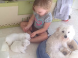 Anna et ses adorables chiot Coton de Tulear