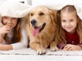 10 races de chiens qui aiment les enfants