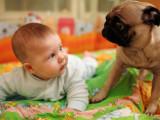 Un chien et un bébé sous le même toit