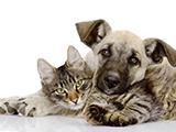 La cohabitation entre chien et chat
