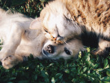 La cohabitation entre chiens et chats : difficultés et solutions