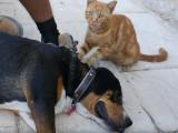 Entre chien et chat