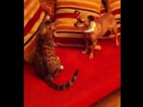 Bagarre pour jouer entre un chat et un pinscher