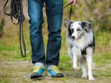 Comment apprendre à mon chien à marcher en laisse ?