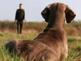 Comment enseigner le rappel à son chien ?