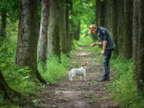 12 règles pour montrer à son chien qui est le maître