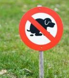 Enfin une solution pour lutter contre les déjections canines !