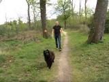 Quelques conseils pour bien jouer avec son chien