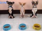 Compilation des chiens les mieux dressés
