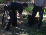 Dresser votre chien avec un ballon