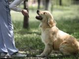 Comment être un bon éducateur pour son chien ?
