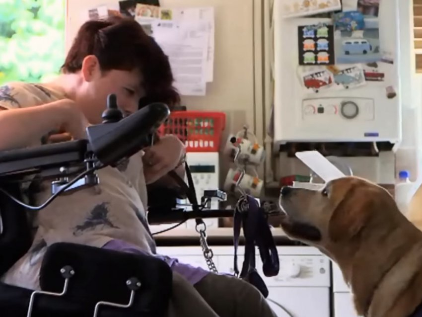 vid o comment un chien peut il aider une personne handicap e. Black Bedroom Furniture Sets. Home Design Ideas