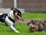 Quelques races de chiens toujours partantes pour le jeu