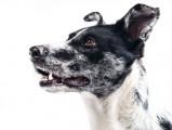 Un chien sème la pagaille dans un aéroport, il est abattu