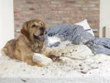 Les troubles du comportement chez le chien