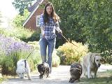 La randonnée avec un chien comme moteur