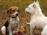 Communication canine : comprendre le langage des chiens entre eux