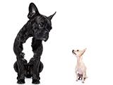Respect de l'autre espèce, le chien a sa propre éthologie!