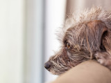 L'anxiété de la séparation : comment aider son chien ?